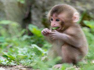 Nằm mơ thấy khỉ đánh con gì? Bí ẩn giấc mơ