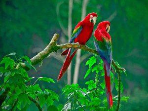 Giải mã ý nghĩa giấc mơ thấy chim mang ý nghĩa gì?