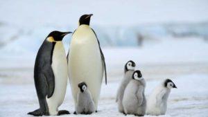 Nằm mơ thấy con chim cánh cụt đánh con số gì đánh con nào