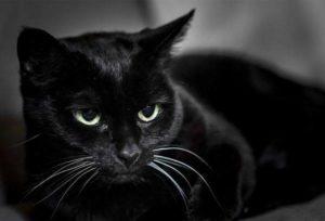 Nằm mơ thấy mèo đen đánh con gì đánh lô đề số mấy