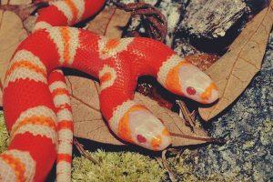 Giải mã giấc mơ thấy rắn 2 đầu là điềm báo gì? Đánh số mấy